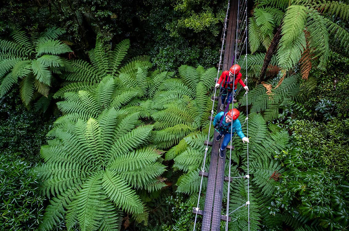 Immerse yourself in ancient New Zealand forest