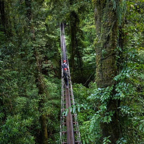 Travel deep into the forest and take in the stunning scenery