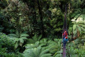 Girls-on-swing-bridge-above-forest