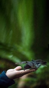 hand-feeding-new-zealand-birds