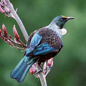 Tui-on-branch