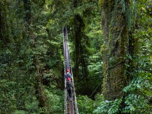 Man-and-woman-on-swingbridge-above-forest