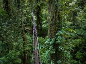 Rotorua-Canopy-Tours-Silver-Fern-Bridge