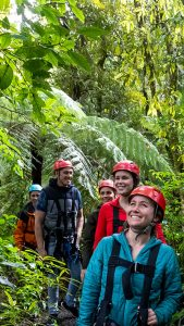 walk-in-the-tree-tops-rotorua-canopy-tours