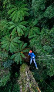 UCT-canopy-tours-near-me