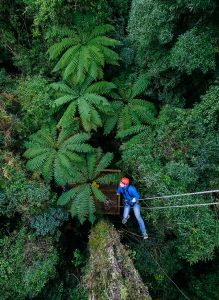 UCT-canopy-tours-near-me-min (1)