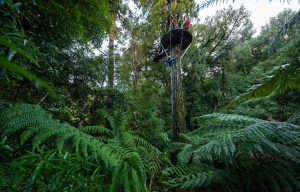 Ultimate-canopy-tour-controlled desceent-min