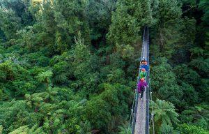 Ultimate-canopy-tour-swing-bridge-min