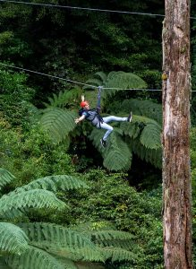 man-ziplining-through-forest