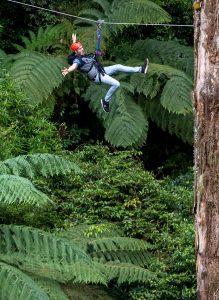 Man-enjoying-zipline-in-forest