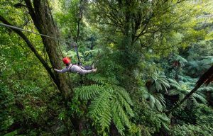 ultimate-canopy-tour-zipline-min