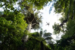 Person-flying-over-forest