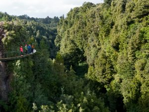 Group-of-people-walking-along-cliffwalk-above-forest-canopy